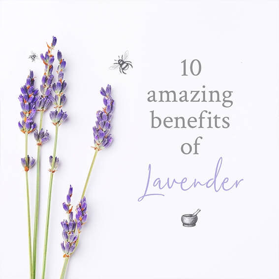 Ingredient of the month: Lavender